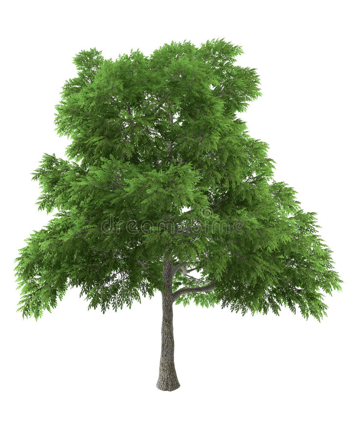 Green tree isolated on white background stock illustration