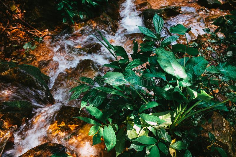 Green tree leaf plant at the forest near the water fall or brook. Nature background royalty free stock photography