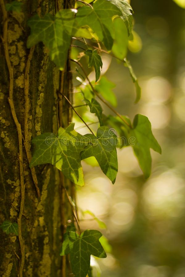 Free Green Tree Leaf Wood Macro Background Nature Beauty Beautiful Royalty Free Stock Images - 162299509