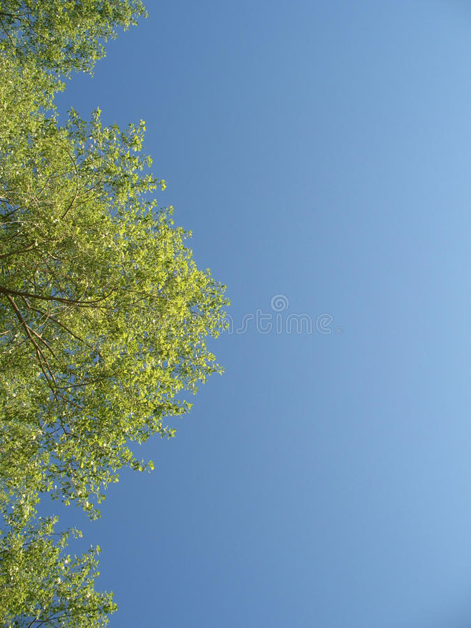 Download Green Tree With Leaves In The Blue Sky Stock Image - Image of ecology, bright: 15302101