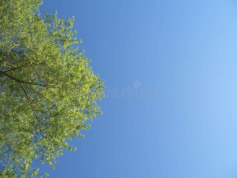 Download Green Tree With Leaves In The Blue Sky Stock Image - Image of tree, blue: 15302105