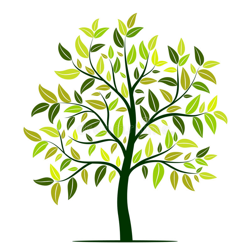 Green tree with leaves vector vector illustration