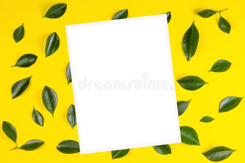 Green tree leaves and white blank frame for text or image on yellow background royalty free stock photo