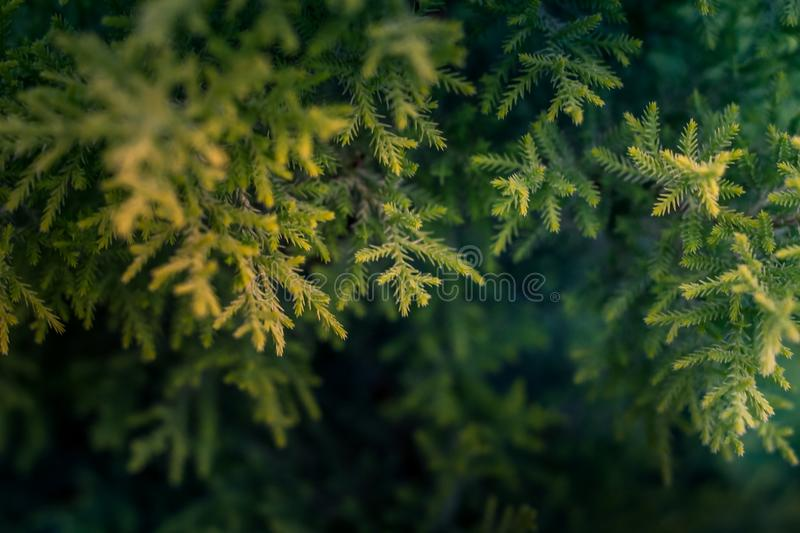 Green Tree Macro Photography royalty free stock photography