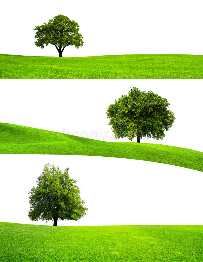 Green tree nature stock images