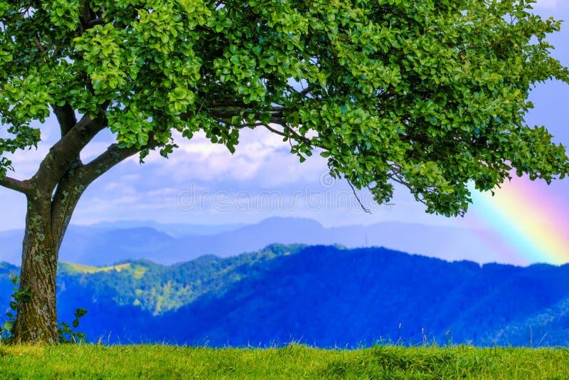 Green tree and rainbow on the top of the mountain. Kobala, Slovenia stock image