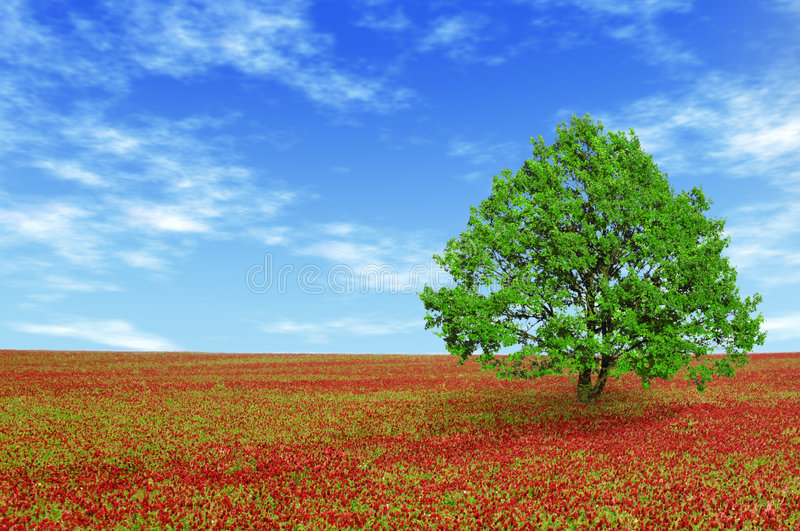 Download Green tree in red field stock image. Image of field, fresh - 9275887