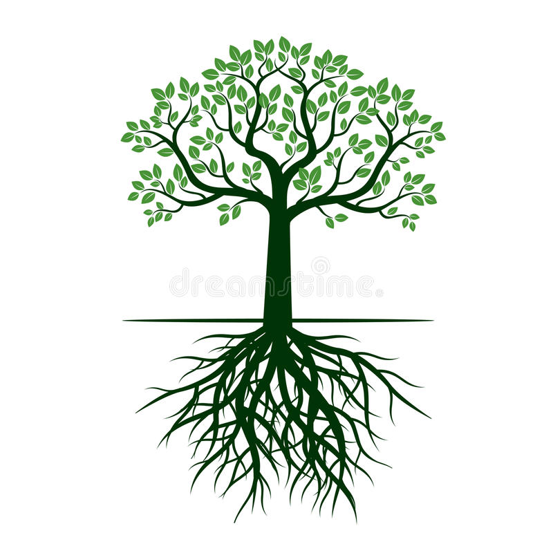 Green Tree and Roots. Vector Illustration. vector illustration