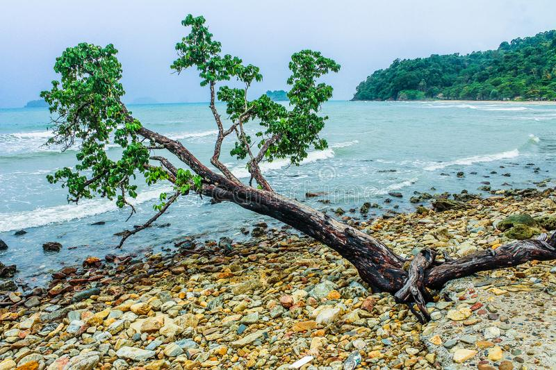 Green Tree Beside Seashore Near Green Mountain royalty free stock images