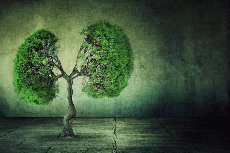 Green tree shaped like human lungs growing from concrete floor royalty free stock images