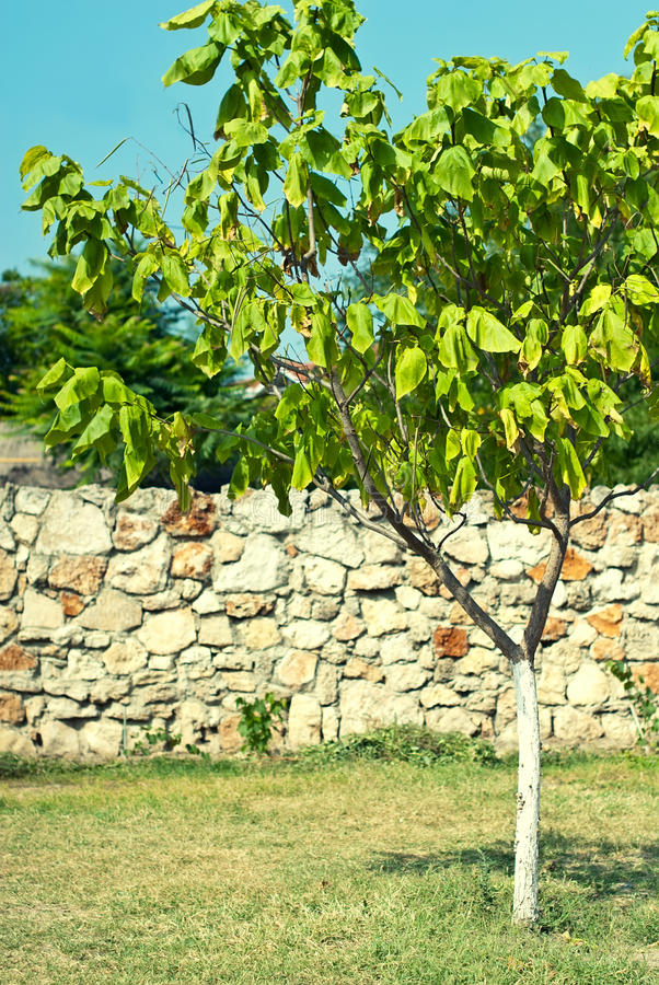 Download Green tree stock photo. Image of country, green, lone - 30936864