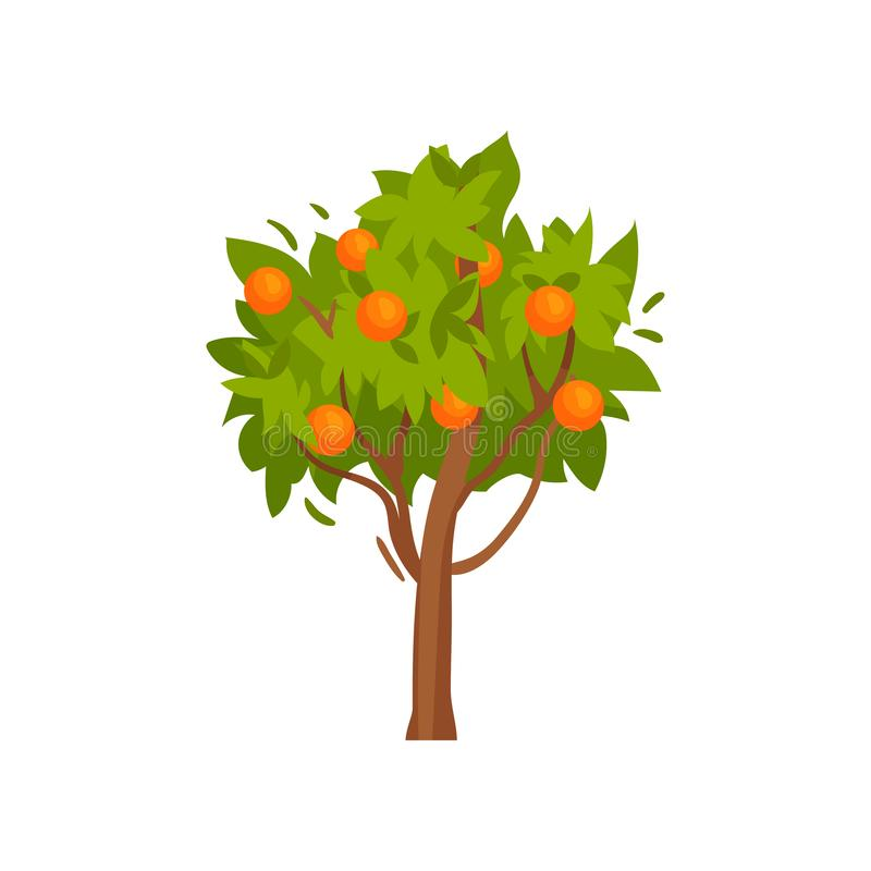 Green tree with sweet ripe oranges. Tasty summer fruit. Garden plant. Organic food. Flat vector design. Small tree with sweet ripe oranges and green leaves vector illustration