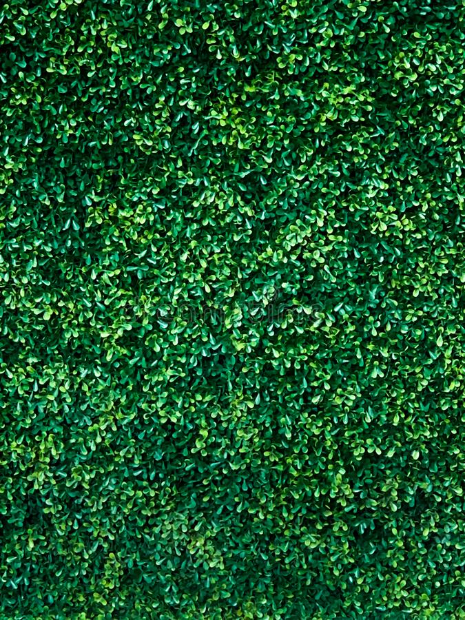 Green tree wall background stock image