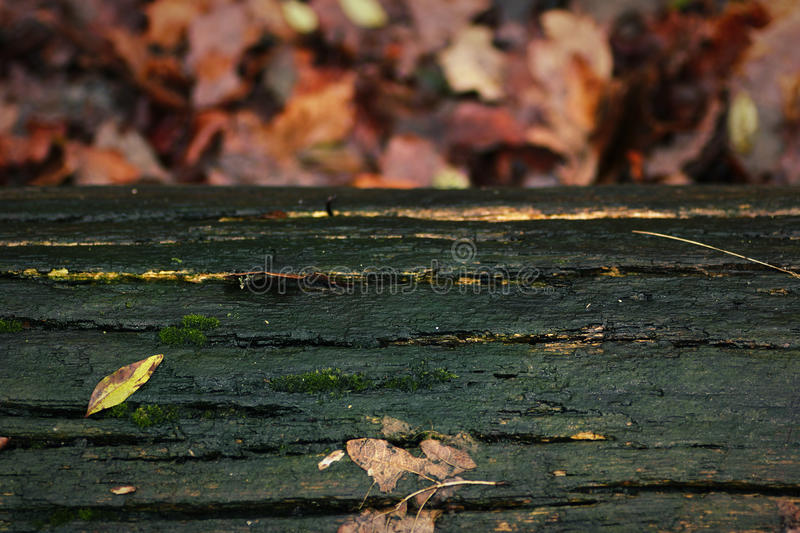 Green tree trunk and autumn leaves in the background.  stock image