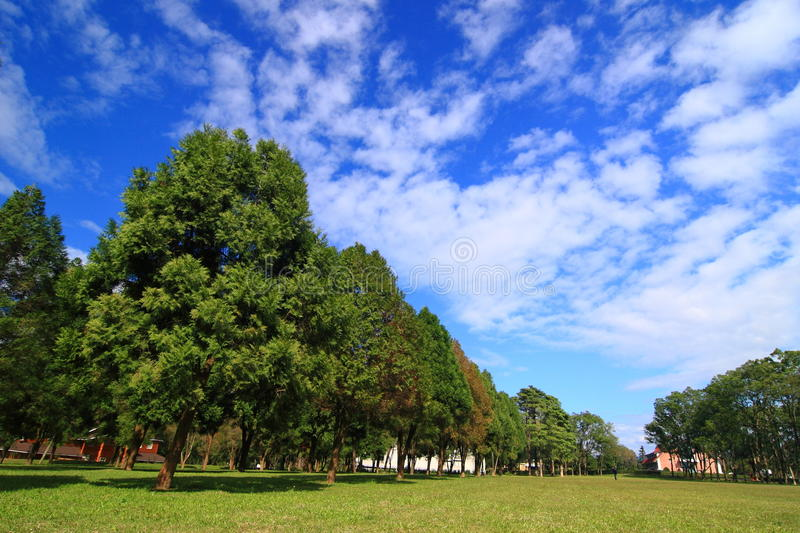 Green tree under blue sky. With white cloud royalty free stock image