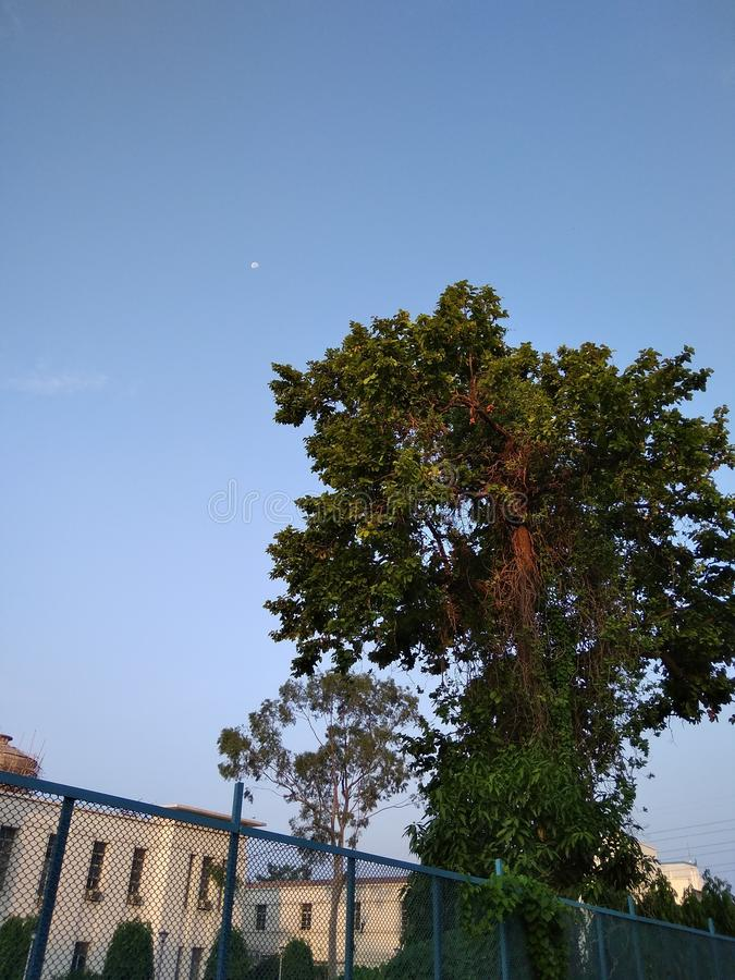 The green tree under the blue sky front of white building Jamshedpur city india royalty free stock photos