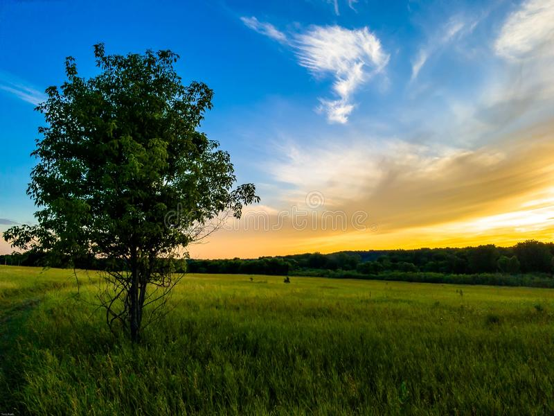 Green Tree Under Blue and White Sky royalty free stock photos