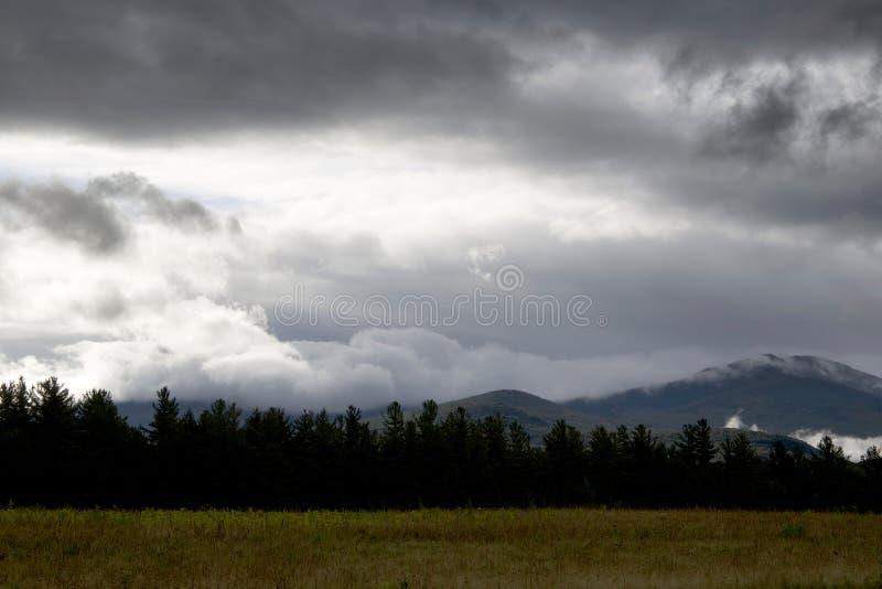 Green Tree Under Cloudy Sky Free Public Domain Cc0 Image