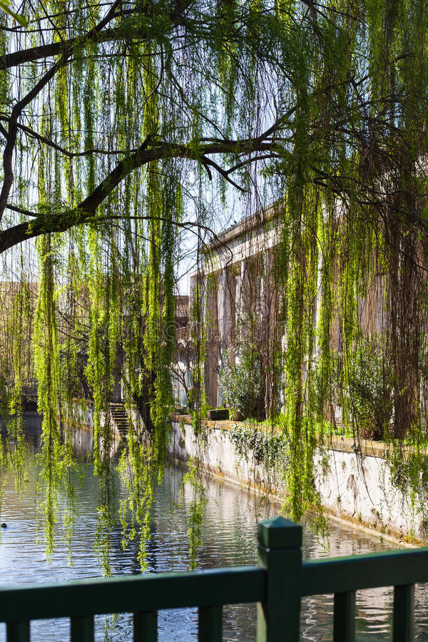 Green tree and waterfront of canal in Vicenza. Travel to Italy - green tree and waterfront of canal roggia Seriola river in urban public park Giardini Salvi stock images