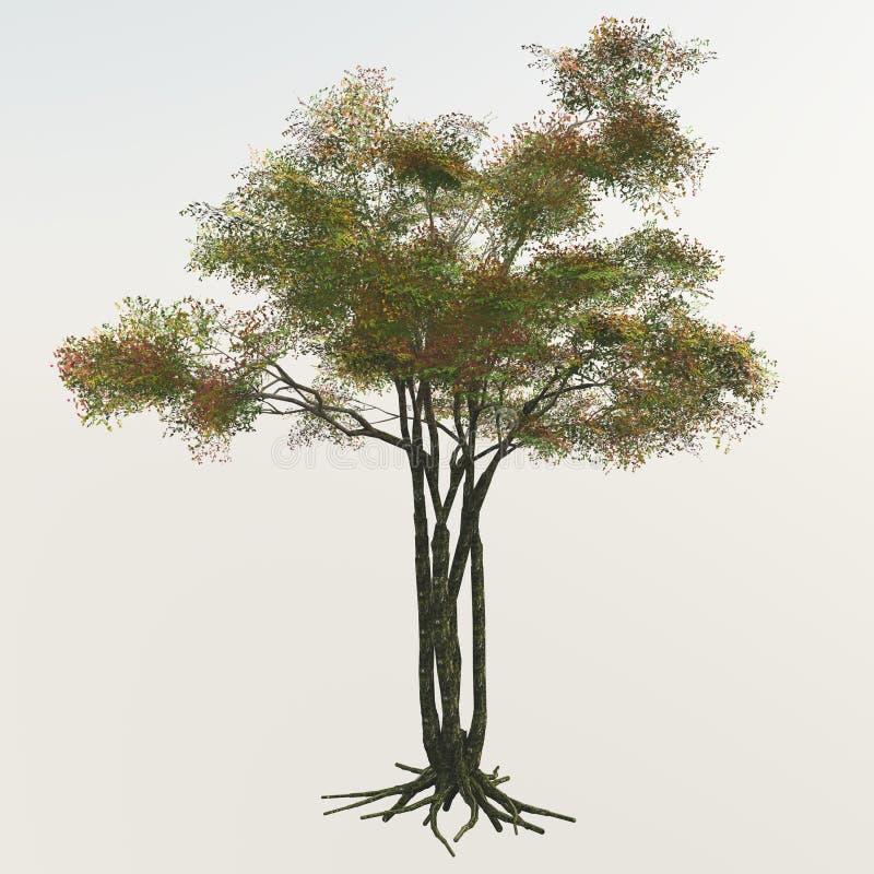 Green Tree On White royalty free stock photos