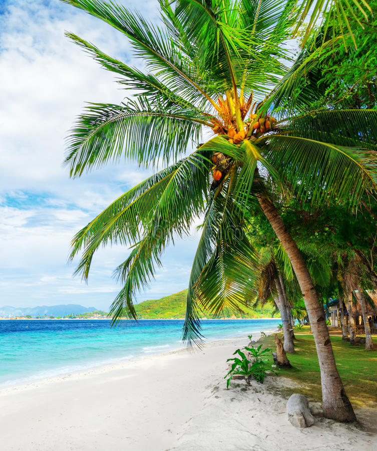 Download Green Tree On  White Sand Beach Stock Image - Image of island, green: 28613311
