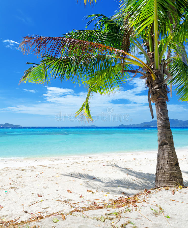 Green Tree On A White Sand Beach Royalty Free Stock Photography