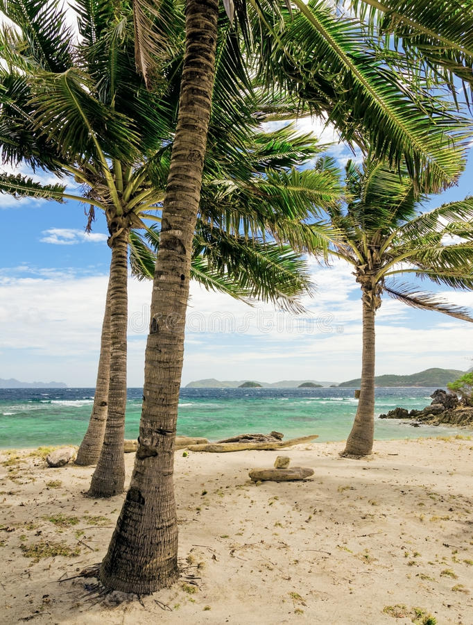 Download Green Tree On A White Sand Beach Stock Photo - Image: 37044644