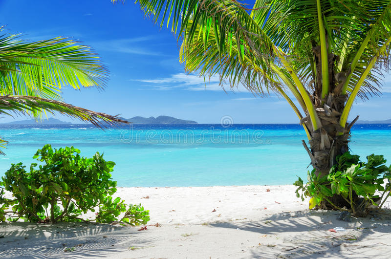 Download Green Tree On A White Sand Beach Stock Image - Image of relax, green: 37044649