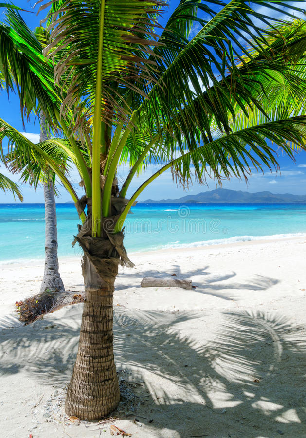 Download Green Tree On A White Sand Beach Stock Image - Image of scenery, green: 41636237