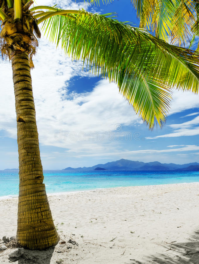 Download Green Tree On  White Sand Beach Stock Photo - Image: 32695576