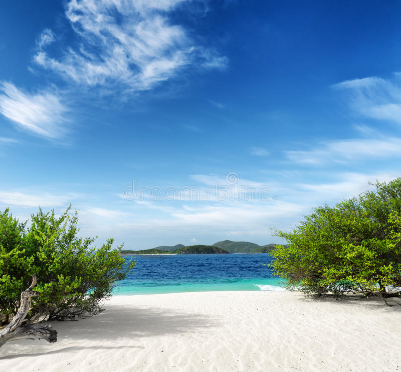 Download Green Tree On  White Sand Beach Stock Image - Image: 32695587