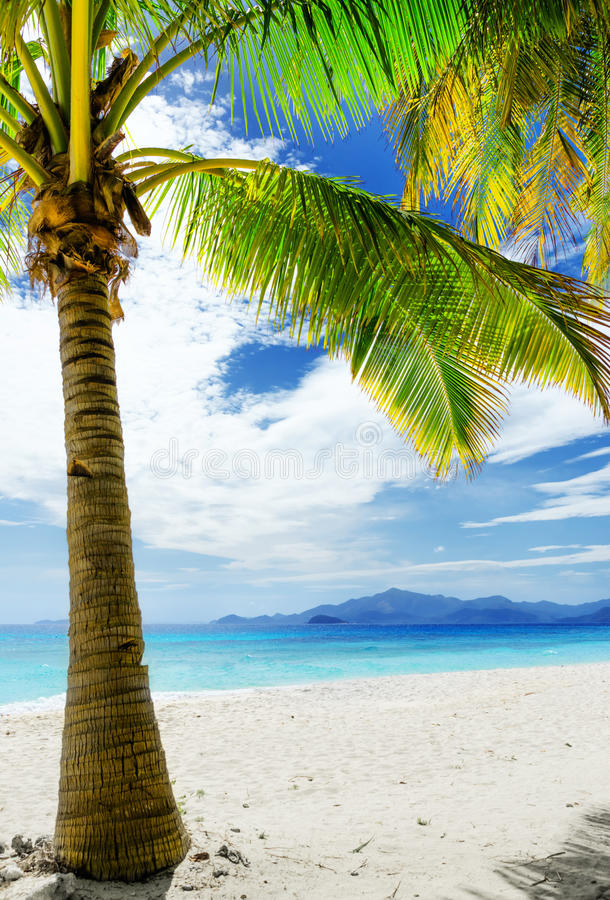 Download Green Tree On  White Sand Beach Stock Photo - Image of exotic, nature: 37044494