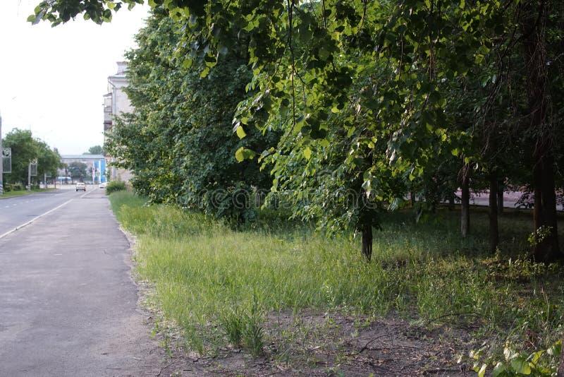 Trees along a city street. Green trees along some quiet city street royalty free stock photos