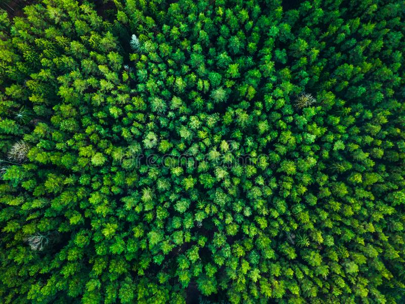 Green trees background in Lithuania, Europe royalty free stock photography