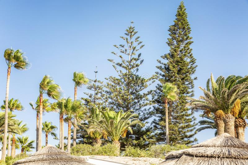 Green trees bend under a strong wind at the resort on a sunny day stock photography