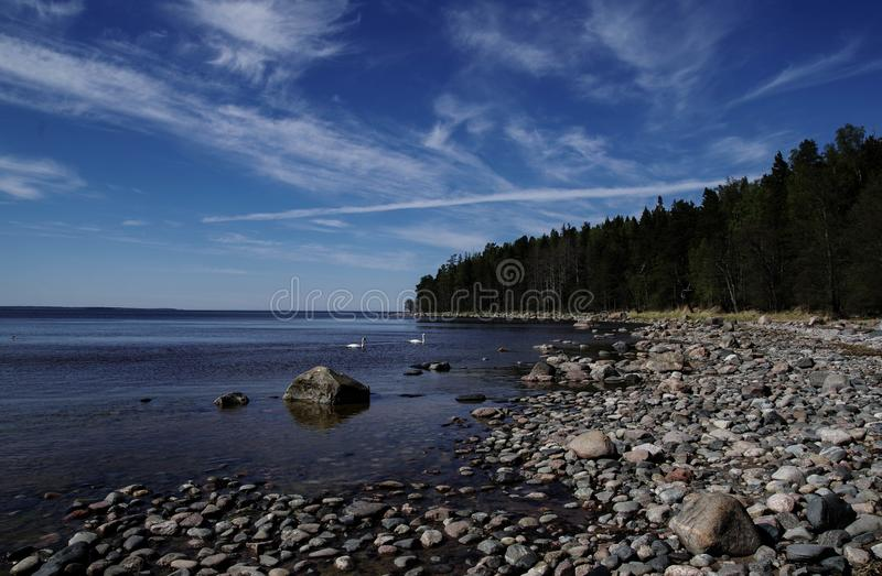 Green Trees Beside Body of Water at Daytime royalty free stock photo