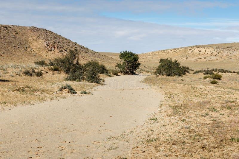 Gobi desert mongolia. Green trees in the desert, Gobi desert, Mongolia royalty free stock photo