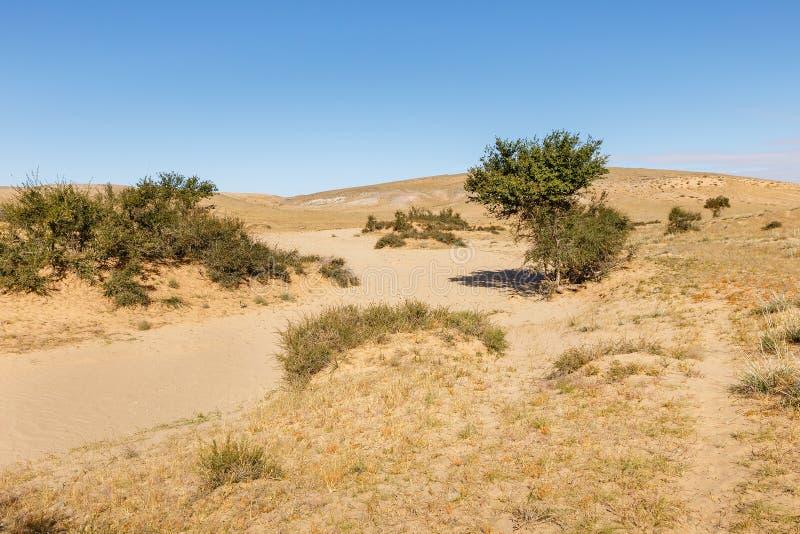 Gobi desert mongolia. Green trees in the desert, Gobi desert, Mongolia stock images