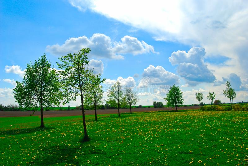 Green trees on a flower meadow, bright day, Spring, Czech Republic royalty free stock images