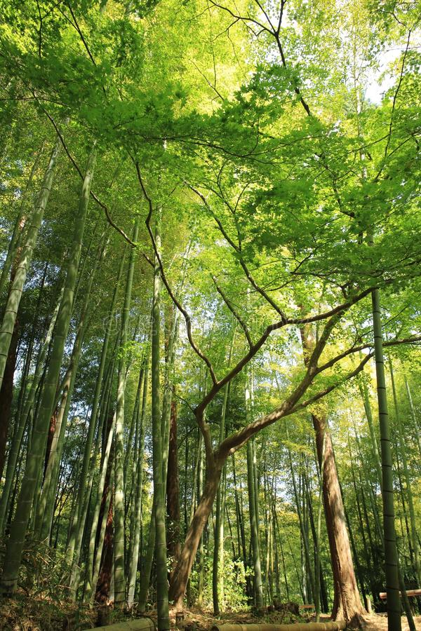 Green Trees In Forest Free Public Domain Cc0 Image