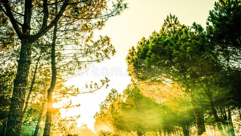 Green Trees during Golden Hour Photography royalty free stock images