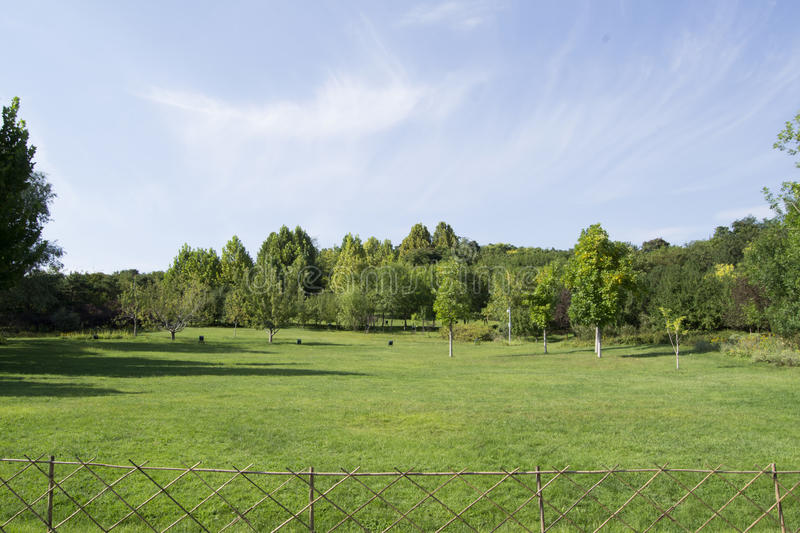 Green trees and grass. Fence stock image