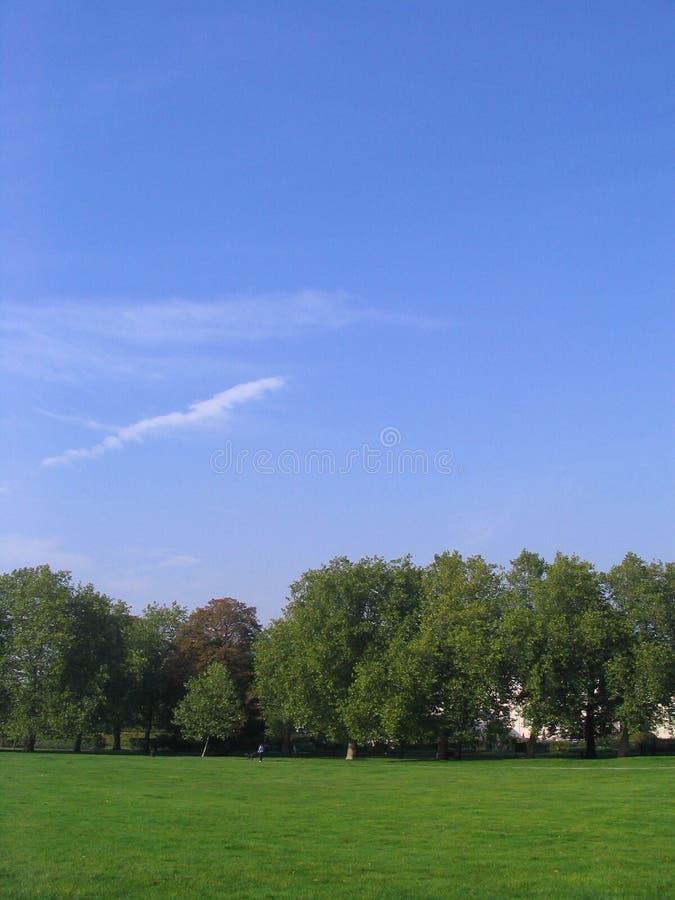 Green trees, green grass, blue sky stock photo
