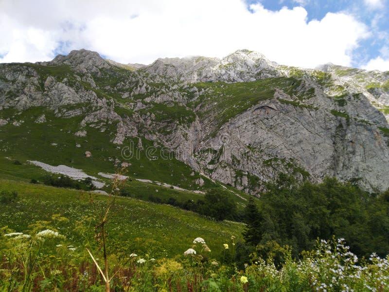 Green trees and mountain stock photos