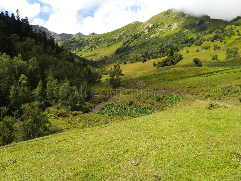 Green trees and mountain stock images