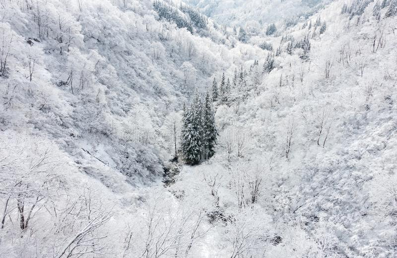 Green Trees Between Mountain With Snow Surface Free Public Domain Cc0 Image
