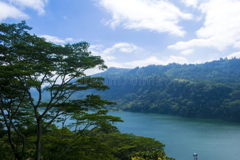 Green Trees Near Body of Water royalty free stock image