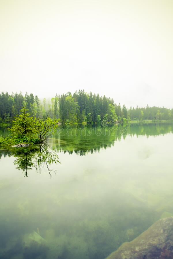 Green Trees Near Body Of Water During Daytime Free Public Domain Cc0 Image