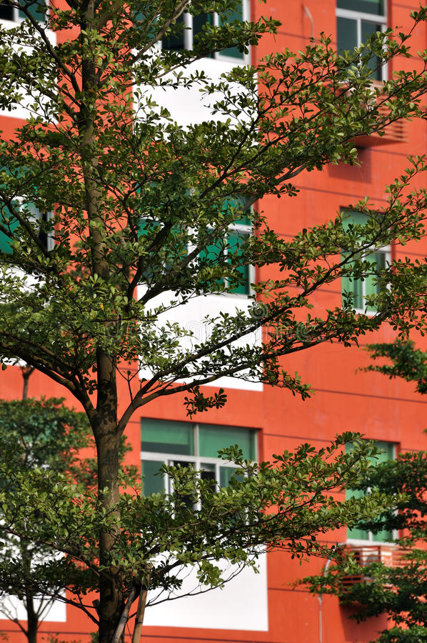 Download Green Trees And Red Architecture Stock Photo - Image: 21111228