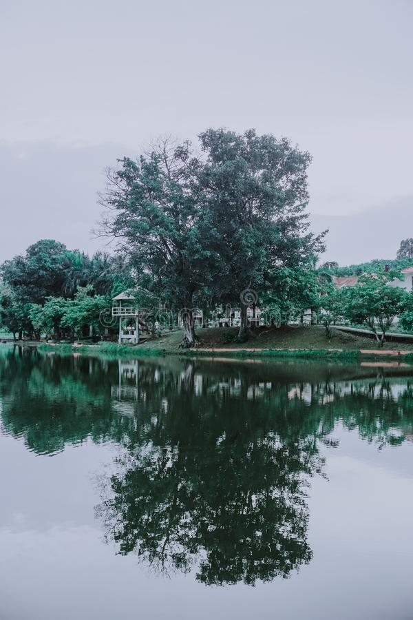 Green Trees Beside the River Under Cloudy Sky royalty free stock photography